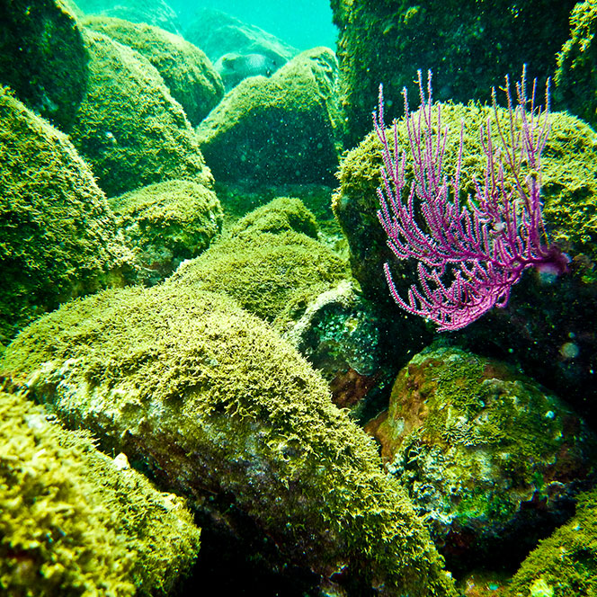 isla gorgona6 kumanday adventures