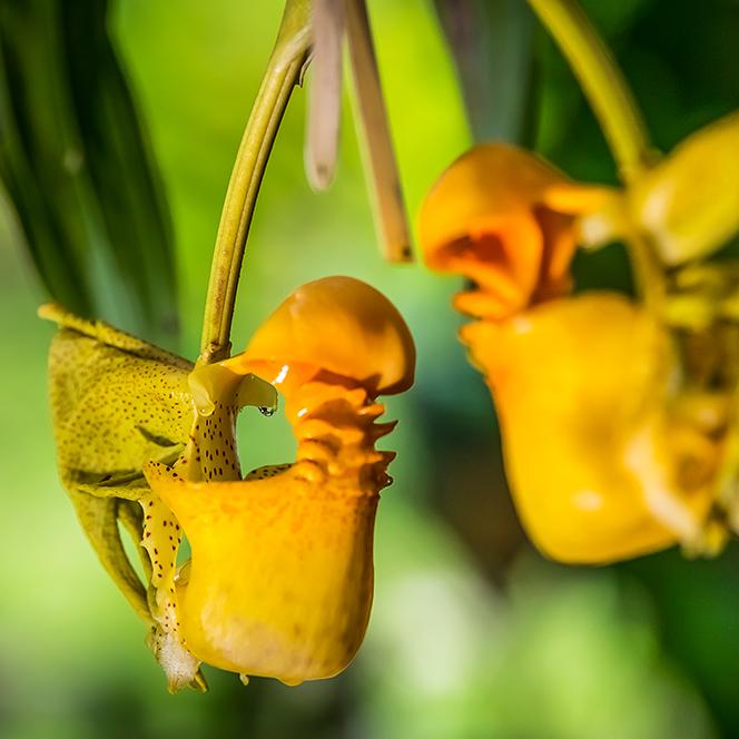 orquideas y tradicion4